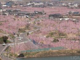 桃源郷のような光景が広がる岡山県赤磐市。この街の道路の維持管理に役立つ実証実験が行われた。